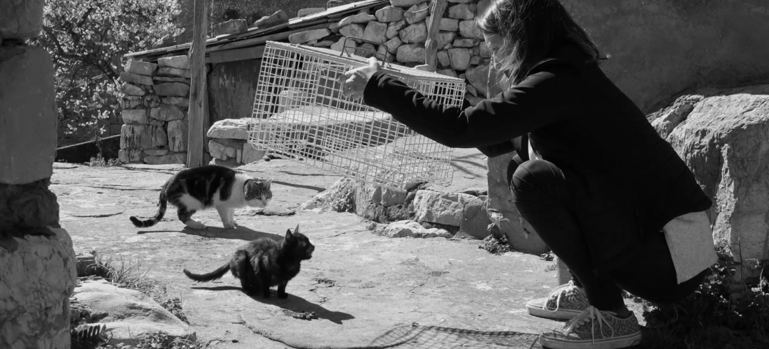 CATSTREAM / director: Sunčica Ana Veldić / documentary, 18:38 min, 2020